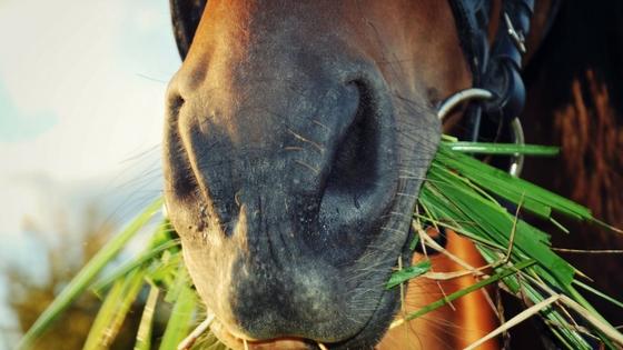 Pferdekrankenversicherung Uelzener